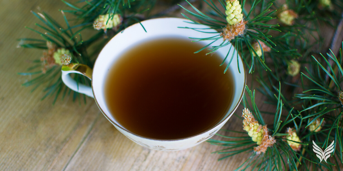 Nature in the Wintertime: Making White Pine Tea Blog Feature Image
