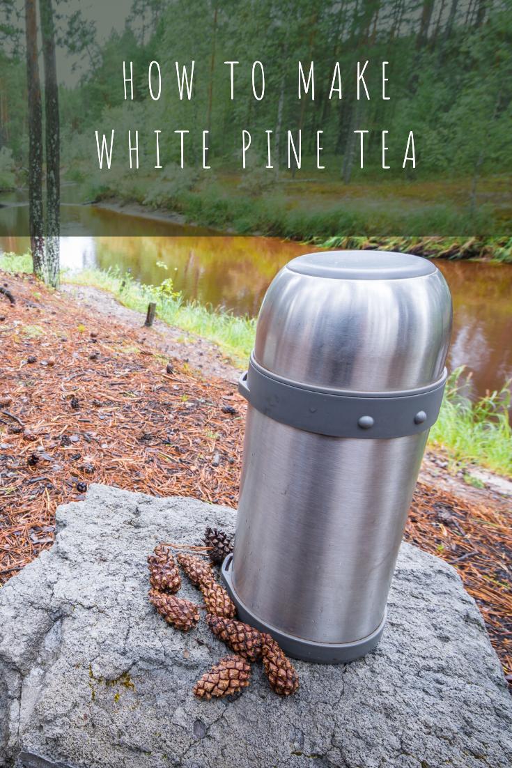 Nature in the Wintertime: Making White Pine Tea Pinterest
