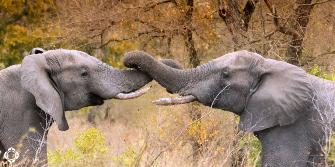 5 Pachydermal Tips to Bring Peace to the Holiday Season