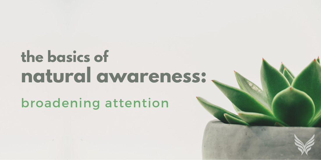 The Basics of Natural Awareness: Broadening Attention Header Image