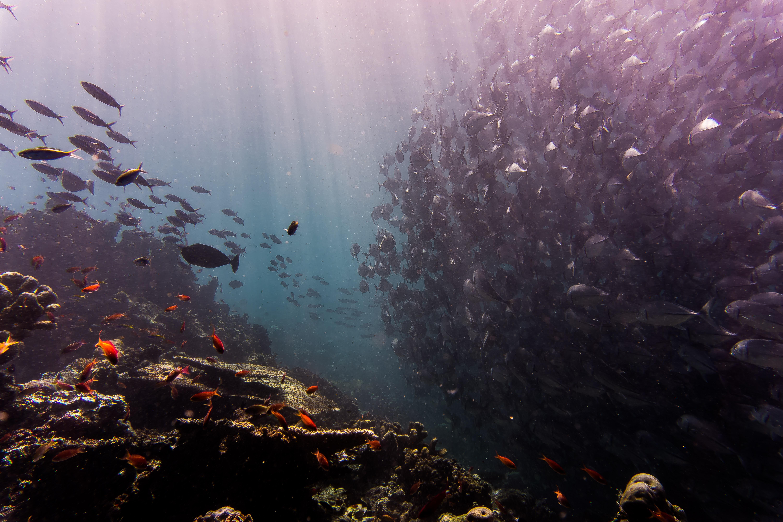 Coming Awake Ocean Culture