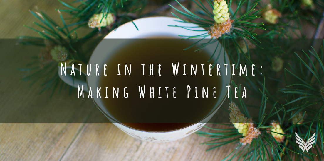 Nature in the Wintertime: Making White Pine Tea