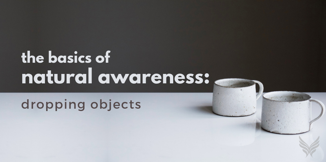 The Basics of Natural Awareness: Dropping Objects Header Image